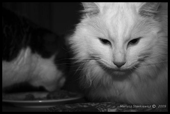 Cat in B&W