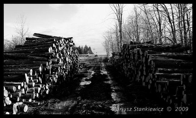 Canada - Creemore lumber yard