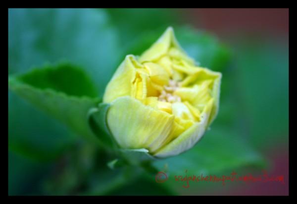 A Green Flower