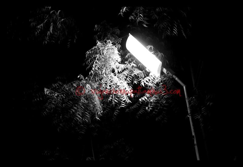 Light & Tree