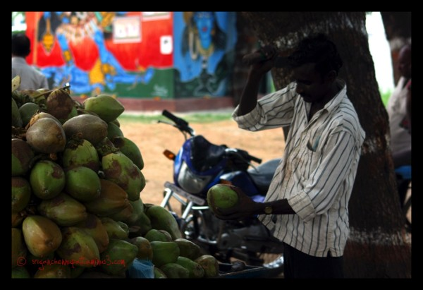 Coconut Seller