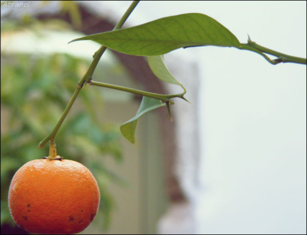 Tangerine of Imaluz ^^,