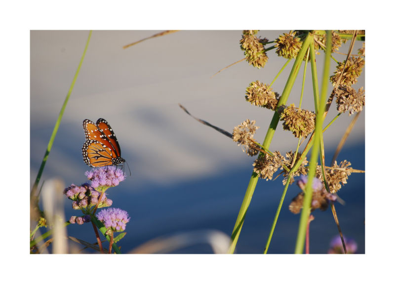 A picture of a butterfly at the Hidalgo Pumphouse