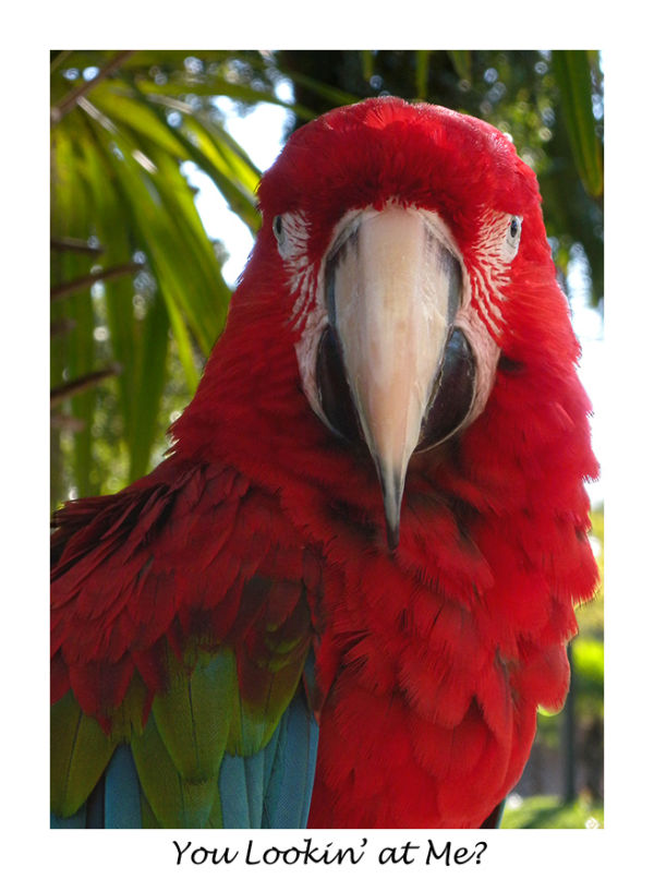 A picture of a Parrot