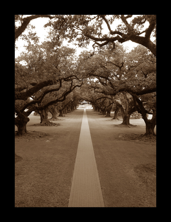 A picture of Oak Alley