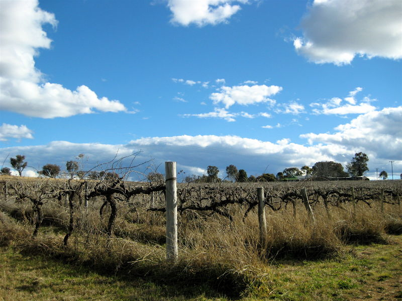 The Neglected Vineyard
