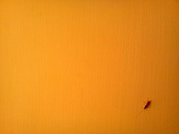 A Bug!