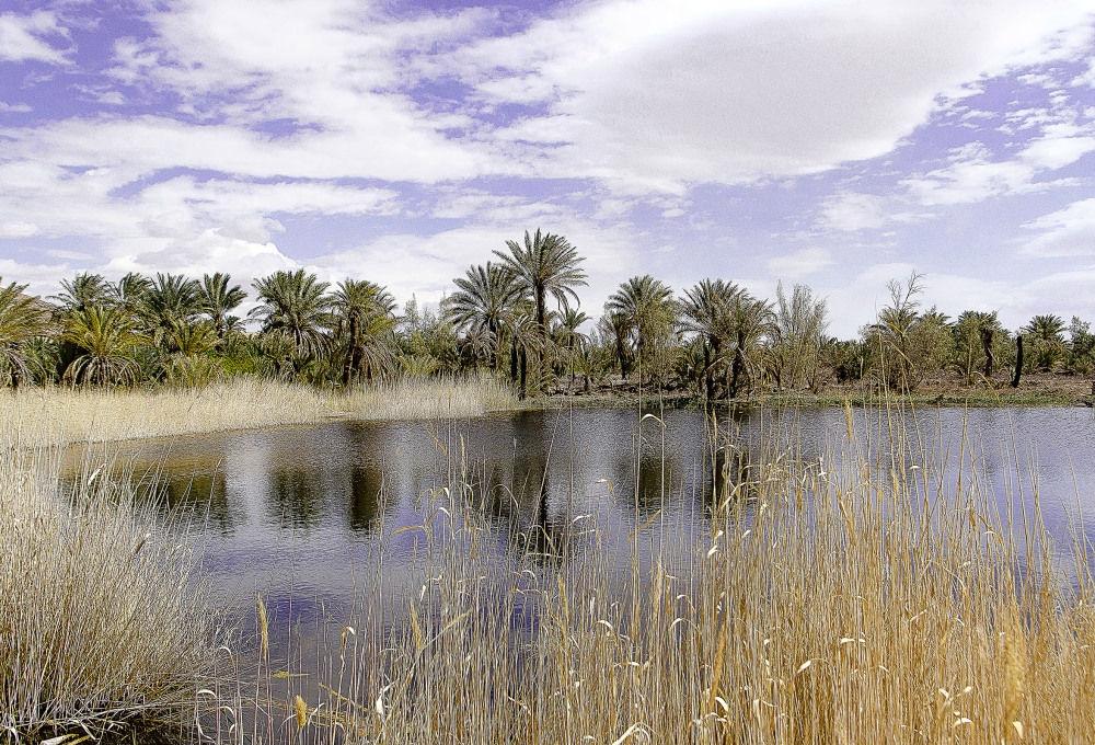 Palm Garden, Garmeh, Khur, Isfahan, Iran