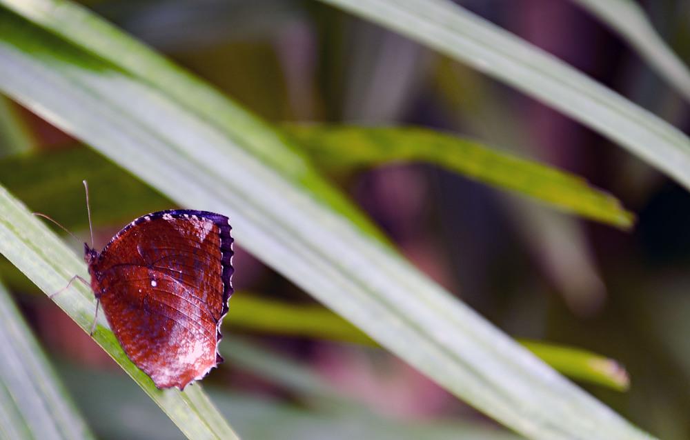 A Little Butterfly