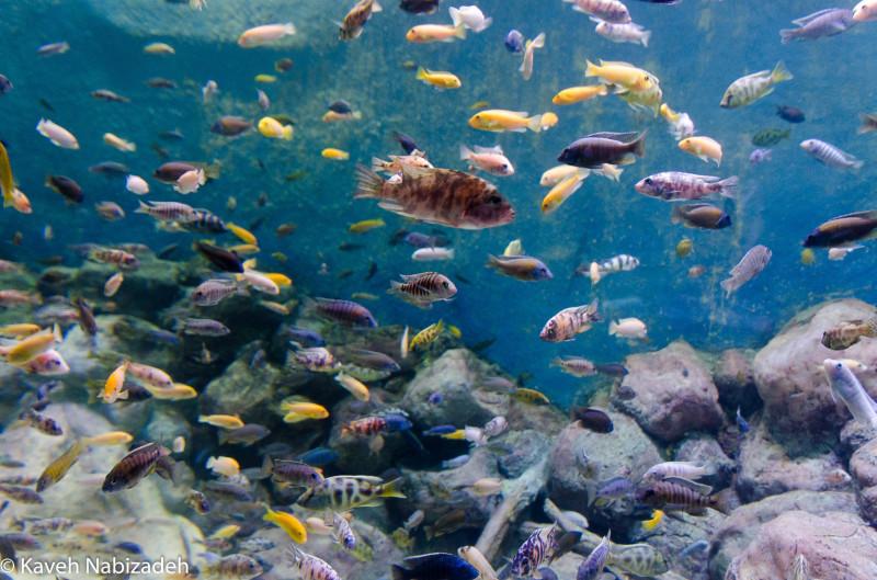 Fish Community