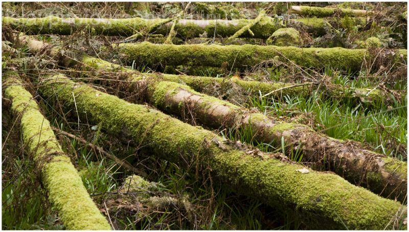 Moss and Trunks