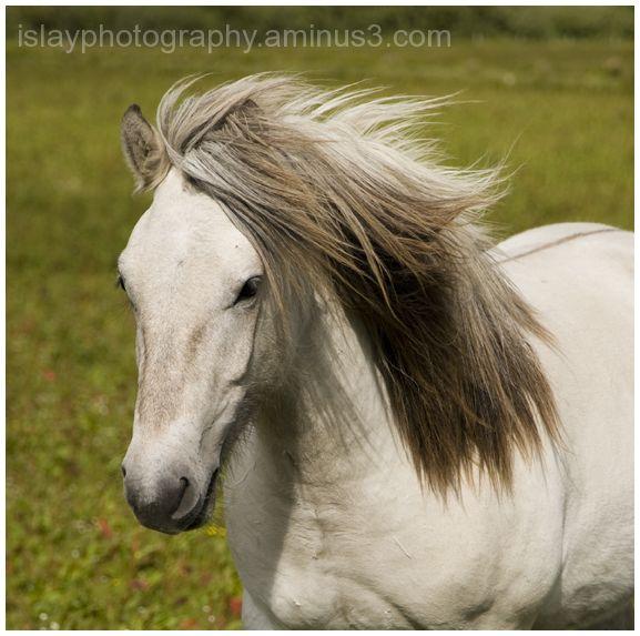 Horse at Kintraw