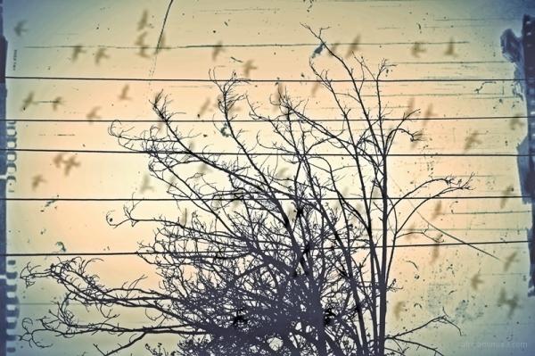 requiem for a crows