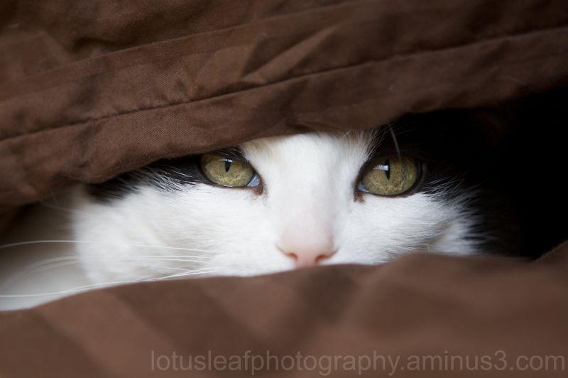 Mischief of a cat!