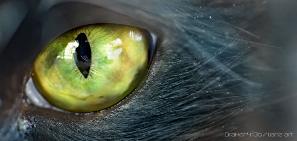 A close up of a cats eye..