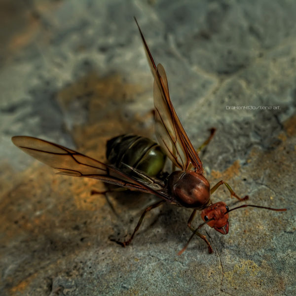 HDR of an insect I encountered at school.