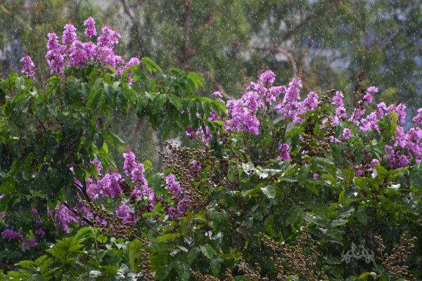 As the rain fell the flowers rejoiced.
