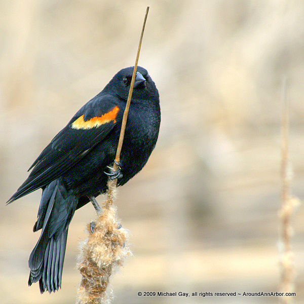 Sassy Bird