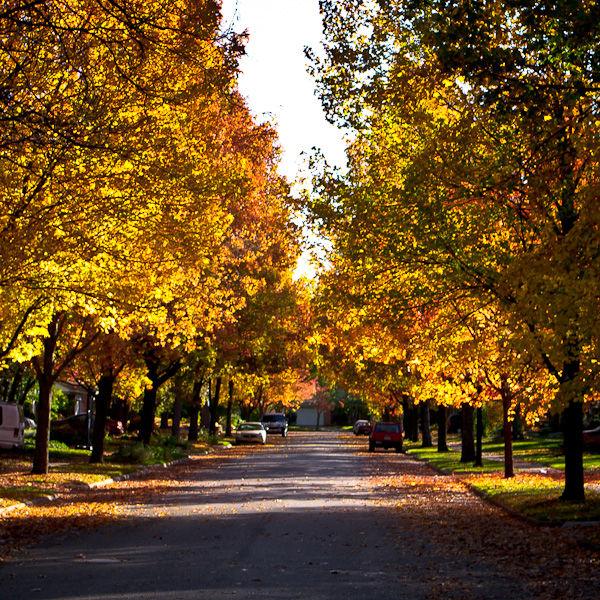 Fall Color: Streetscape
