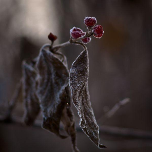 Morning Frost II