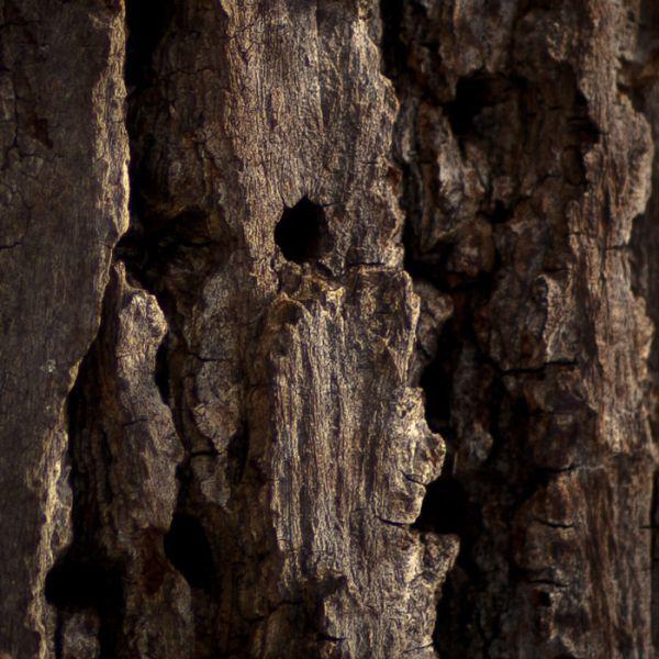 'pecker-wood