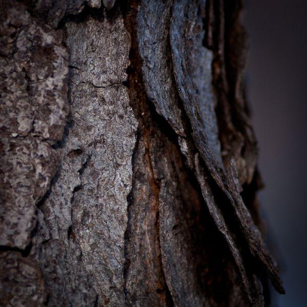 Wild Cherry Textures