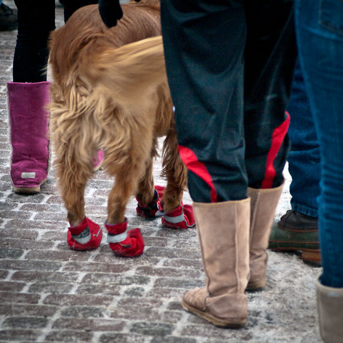 Boots and a Waggy Tail