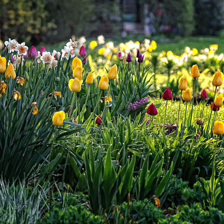 Springtime in My Neighborhood