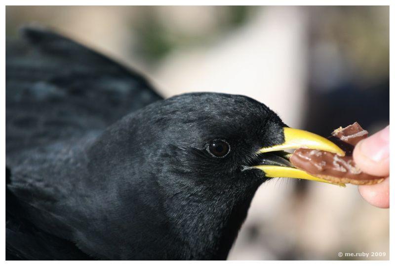 Hungry Bird II