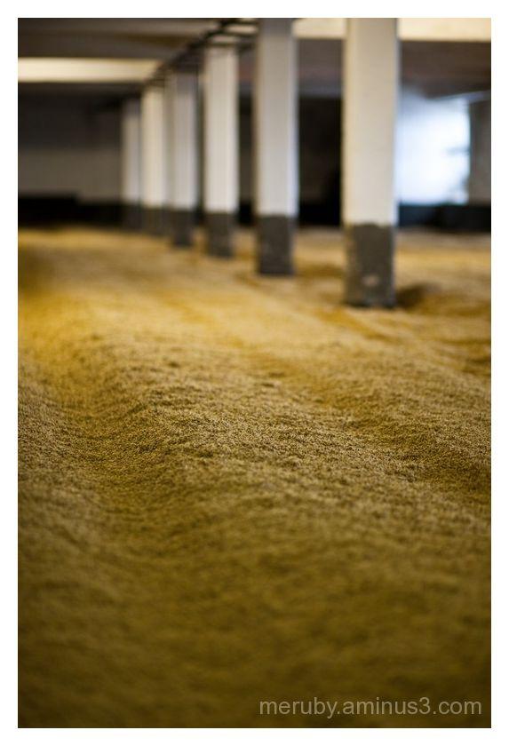 malting floors
