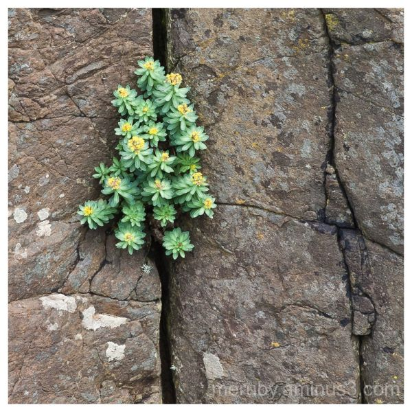 Small plant on rocks