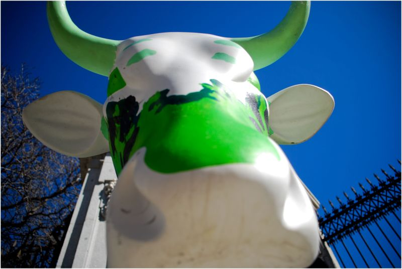 this is a cow form caw parade madrid