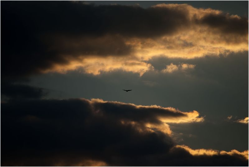 An eagle in the midle of beautifully lit cloud
