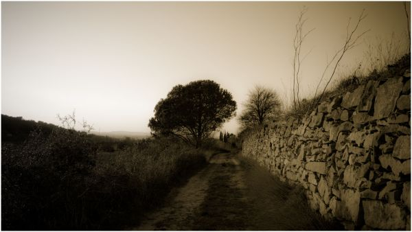 a sepia immage of a path with a wall