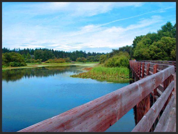 Bridge over Beauty