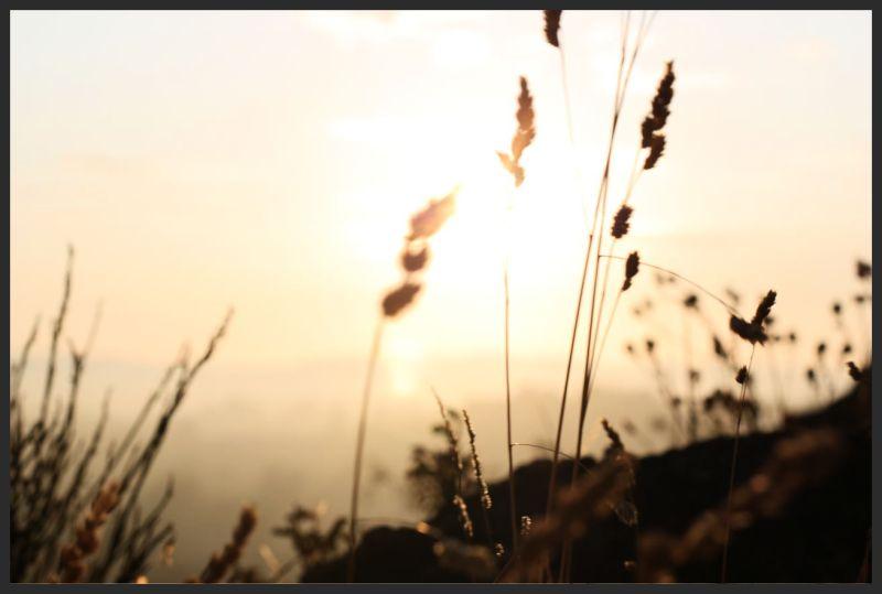 Setting sunlight
