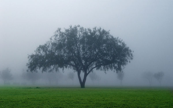 kissed by the fog