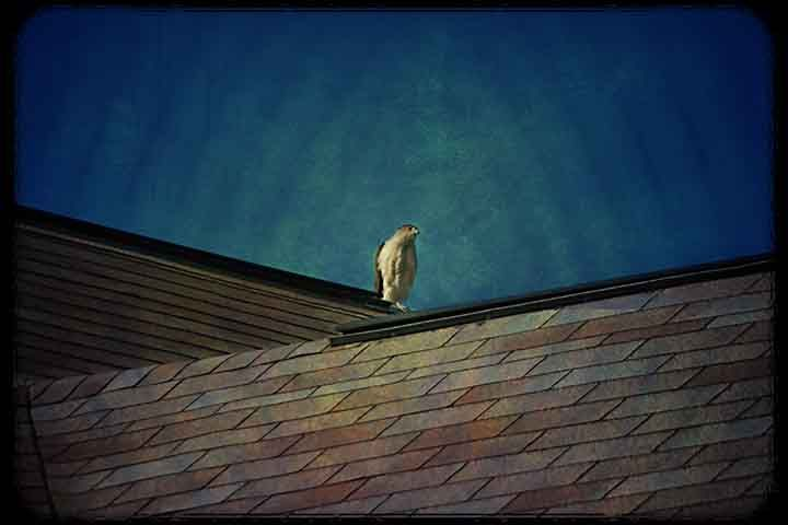 Rooftop Perch
