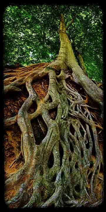 Getting to the Root