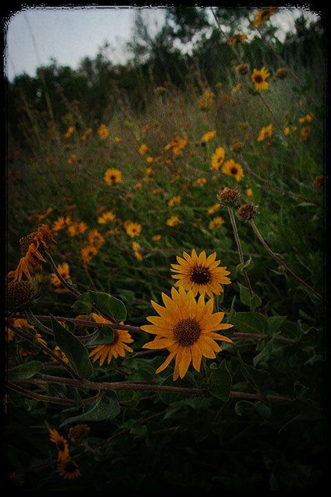 Uphill Flora