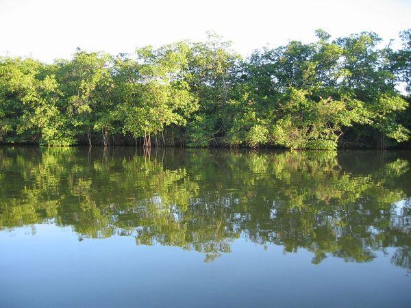 mangrov in the morning