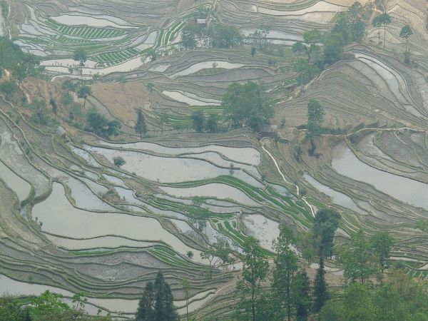 les rizières en terrasse du Yunnan