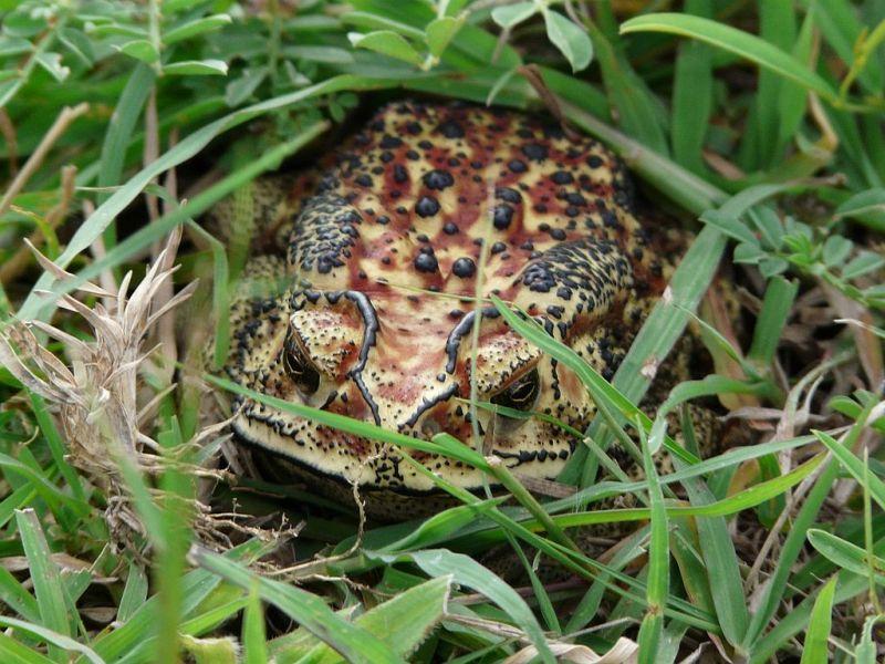 frog portrait