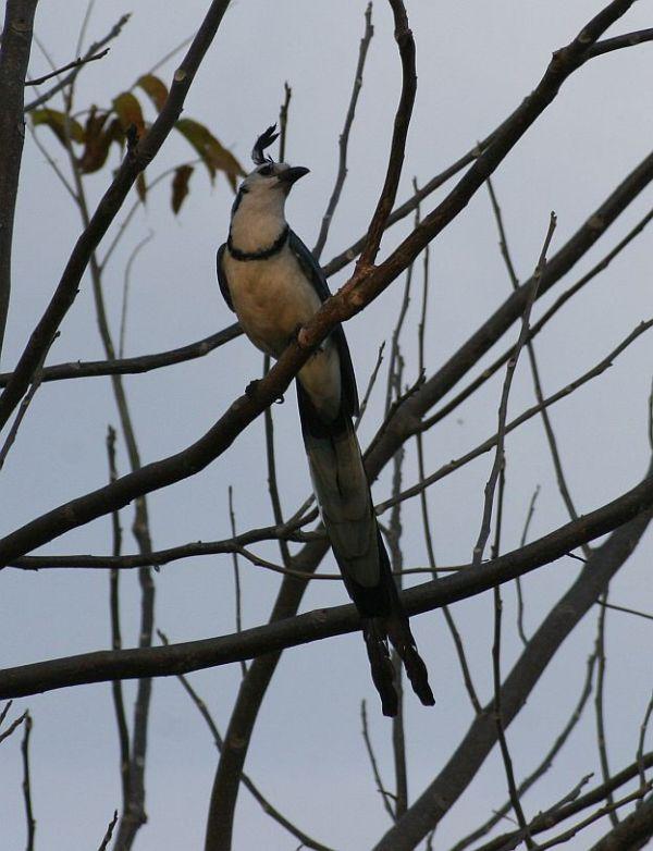 south america birds 1
