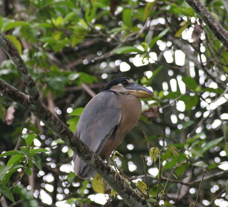 south america birds 2