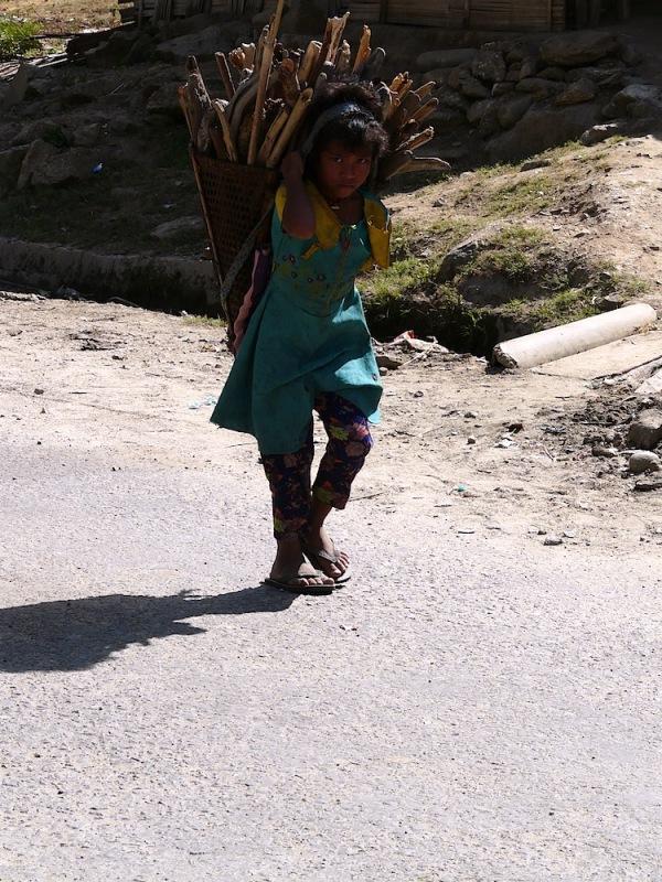 ramassage du bois en Arunachal pradesh