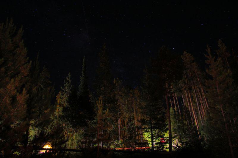 Night Stars Tree Teton Park Wyoming