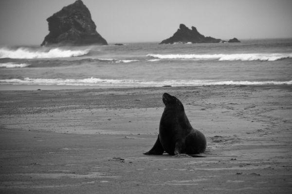 Seal Mark Pedri
