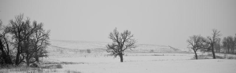 Spearfish South Dakota Tree Winter Snow White