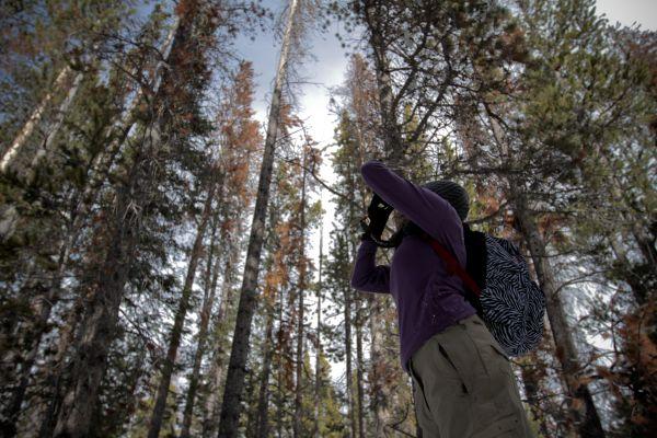 Wyoming Snowshoeing MacKenzie Mixer Sun Tree